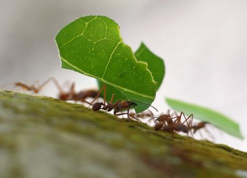 10-ants